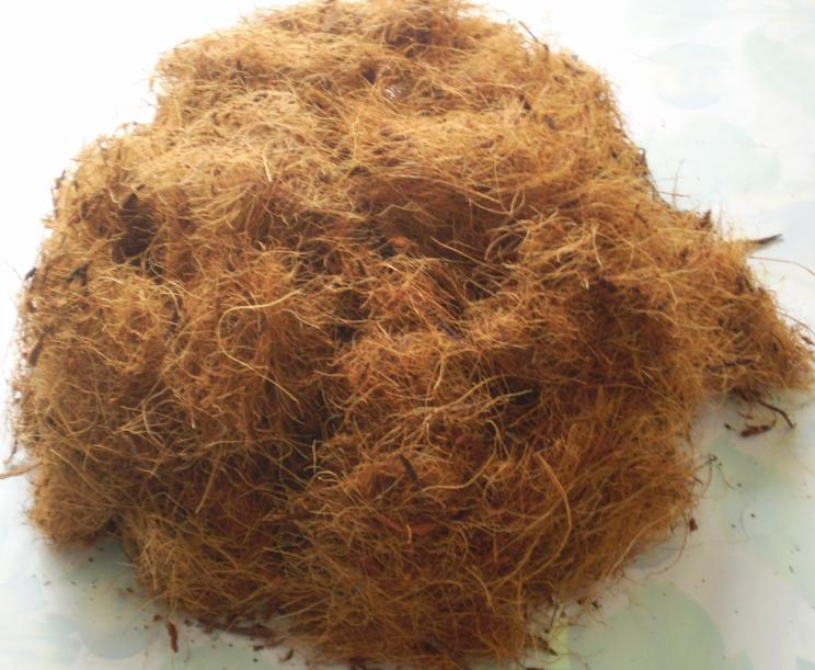 Market coconut fiber analysis