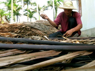 Dried coconut sheath Opportunities to export to Japan