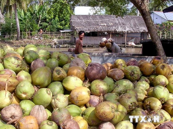 Learn about pre-processing procedure in Ben Tre coconut
